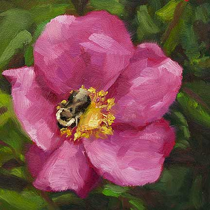 Bumblebee on Rose - day 10 of 30 in 30 by Krista Hasson