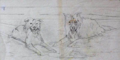 Border Collies - initial drawing